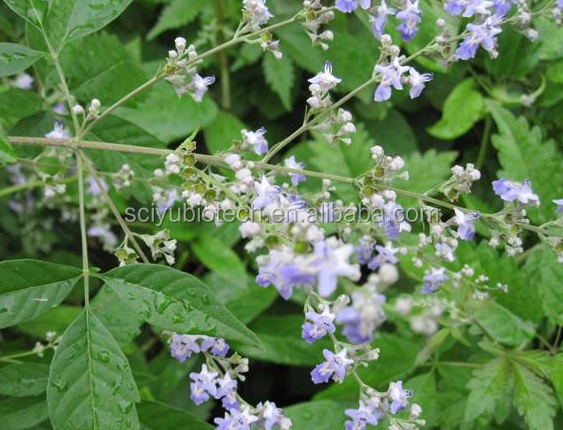 Vitex Agnus-Castus Extract /Vitexin 5%/Chasteberry Extract powder