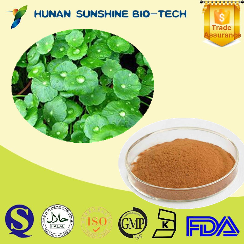 Gotu kola dried extract 10:1 / asiaticoside powder 80%