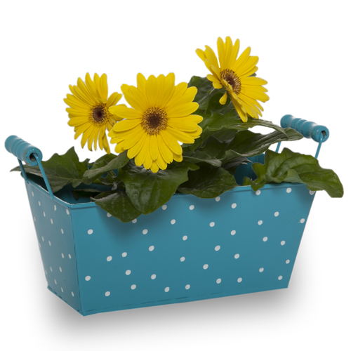 Polka Dot Rectangular decor metal gardening flowers pots with wood handle