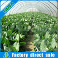 Vegetable plastic film cover tropical greenhouses