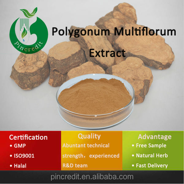 Chinese Herbal Polygonum Multiflorum Thunb Extract