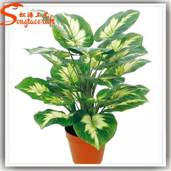 Grossiste plantes et arbres acheter les meilleurs plantes for Tous les plantes
