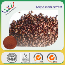 FREE SAMPLE Chinese golden supplier 100% pure grape seed P.E Grape seed extract opc