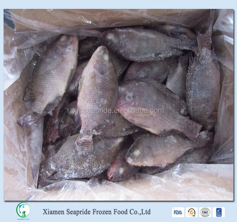 Fish Farming Provide Frozen Tilapia Fish