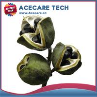 Xanthoceras sorbifolium seed from China