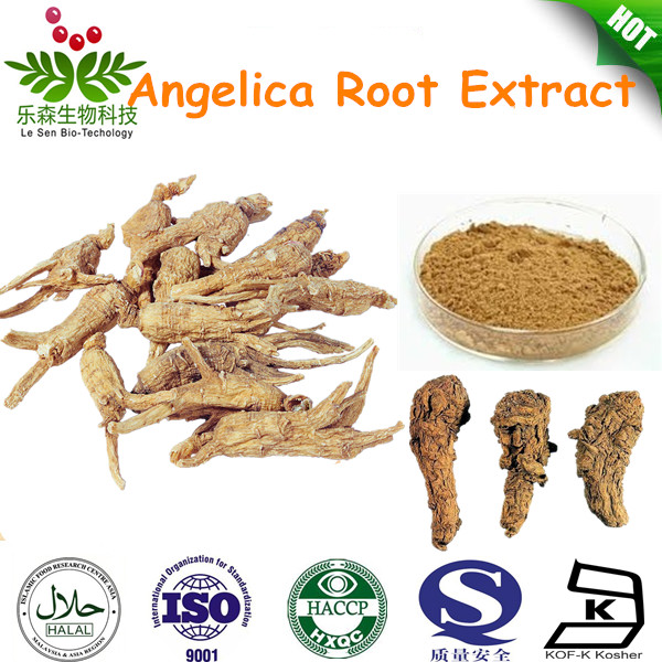 Pure Angelica root extract angelica sinensis
