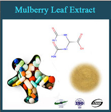 GMP factory supply 100% pure natural 1-DNJ mulberry leaf extract powder