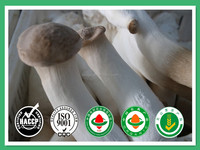 Market prices for Vacuum packed Fresh King oyster mushroom