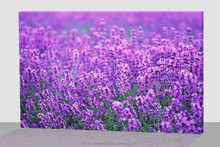 Beautiful Provence Lavender flower led canvas painting