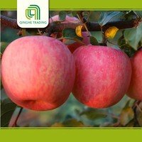 Hot selling washington red delicious apples best price with low price