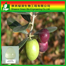 Pure Natural Oleanolic Acid Extract/oleanic Acid/ High Quality Olea Europaea L.