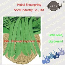 Chinese vegetable seeds SX Kidney Bean Seeds