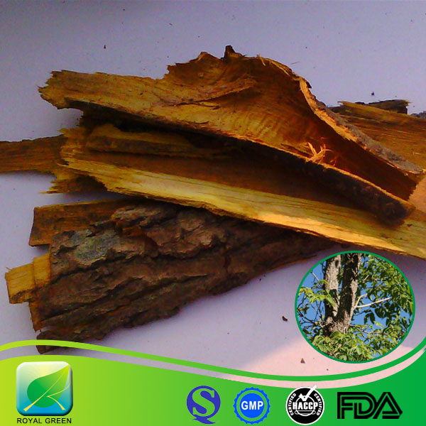Hot sale product High quality Pure Natural Herbal Plant Amur Corktree Bark