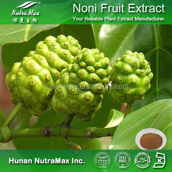 Food and Cosmetic Grade Noni Extract, Noni Powder Extract, Noni P.E.