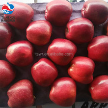 Chinese Huaniu apple Fresh red delicious apple fruit fresh apple