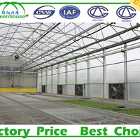 Used Agriculture Plastic Tunnel Greenhouse For