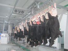 Halal cattle slaughter equipment