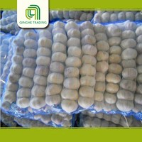 white garlic 2016 new fresh with high quality