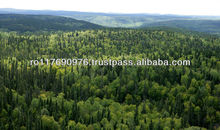 FOREST FOR SALE 800HA