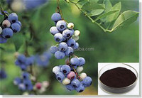 100% natural organic advanced fresh bilberry extract