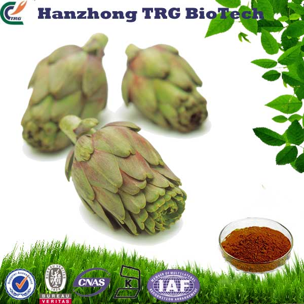 HPLC natural chicory extract powder inulin 90% made in China