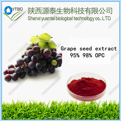 factory supply natural 95% OPC red grape skin extract