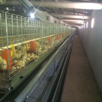 4 Layers Galvanized Design Boriler Chicken Cages / Animal Cages For Sale
