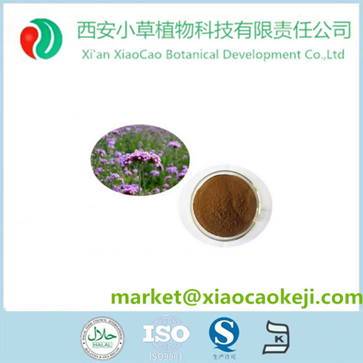 Herb Plant Extract Blue Vervain Verbena Extract Powder