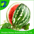 2016 Latest watermelon seed for sowing