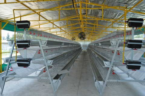 High quality battery chicken egg layer cages for sale