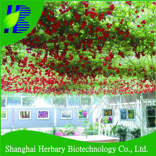 Chinease supply hybrid tomato tree seeds for planting