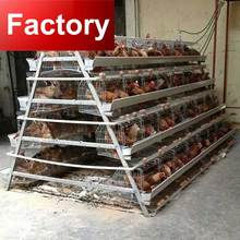 African warehouse chicken egg laying equipment