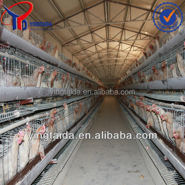 types of sheds for broilers with floor