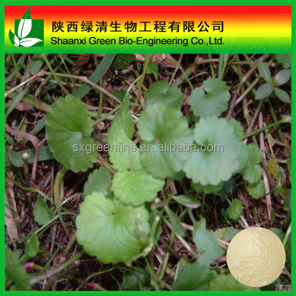 High Quality Gotu Kola Herb Extract/ High Quality Asiaticoside/Gotu Kola P.e