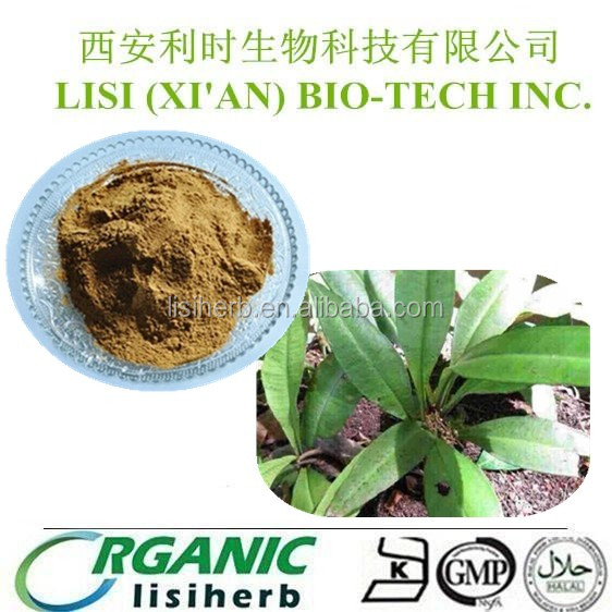 LISI herb Supplies 100% Natural Excellent quality Kacip Fatimah extract