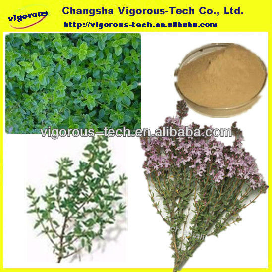 High Quality Thyme Herb Extract/Thyme Extract/Thyme extract trade