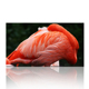 Flamingo Frameless Canvas Printing/Homeware Decor Gifts/Animal Modern Wall Art