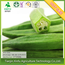 High quality fresh IQF whole okra for sale