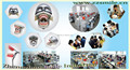 Phantom head/dental teaching simulator/advanced dental phantom head