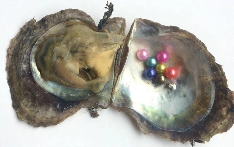 6-8mm cultured pearl oyster with high quality