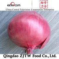 China Fresh Red Onion rate
