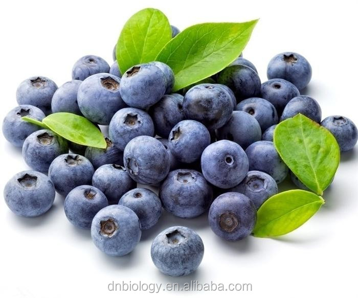 blueberry leaf extract powder/blueberry extract anthocyanin/blueberry extract 10:1