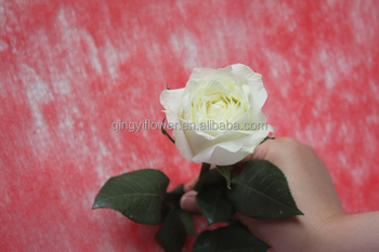 Yunnan import natural fresh cut rose flowers