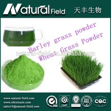 With 12 years experience top quality 100% natural wheatgrass powder