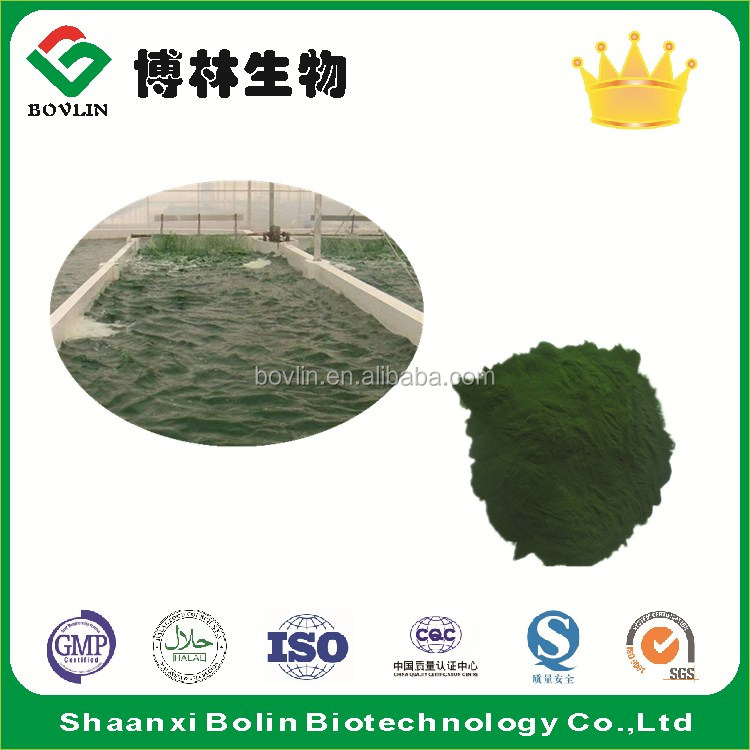 100% Pure Green Chlorella Vulgaris Powder with Low Price