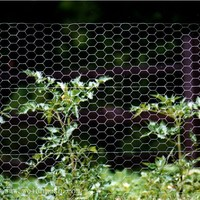 galvanized chicken wire mesh poultry netting