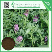 Offering High purity Coleus Forskohlii Extract Forskolin 20% by HPLC