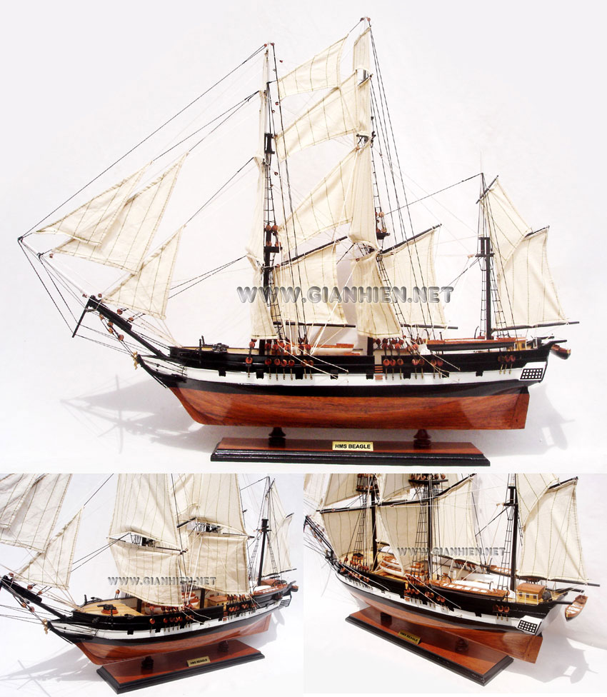 HMS BEAGLE WOODEN TALL SHIP MODEL - HANDICRAFT OF VIETNAM