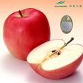 Health Food Apple Fruit Juice Concentrate Powder 4:1 5:1 10:1
