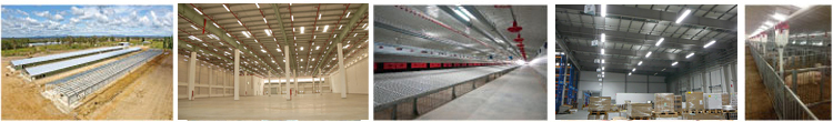 poultry light management, lighting for poultry housing, raising chickens for egg production lighting